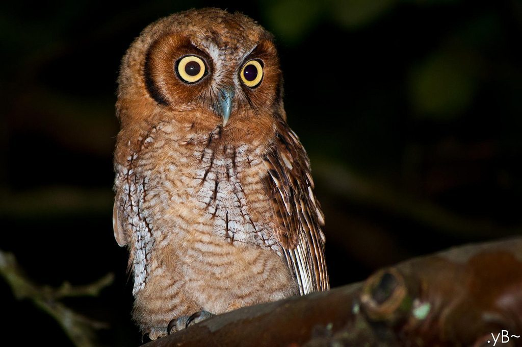 What makes a Night Owl?