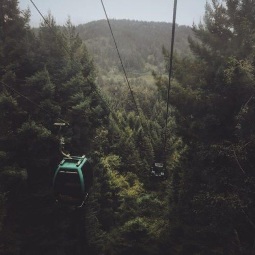 Redwood Trees Lift