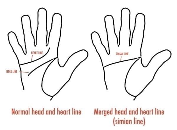 Simian Line Diagram